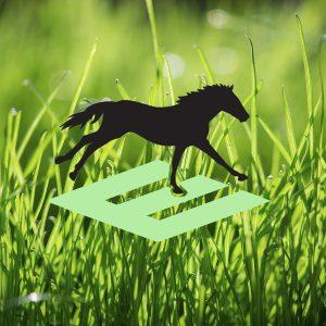 Vitamin-E-An-Essential-Nutrient-for-Horses1
