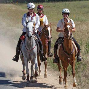 Myths-Concerning-Feeding-Fat-to-Endurance-Horses