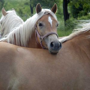 Research-Proven-Neigh-Lox-is-Suitable-for-All-Horses-No-Matter-Their-Age-or-Use