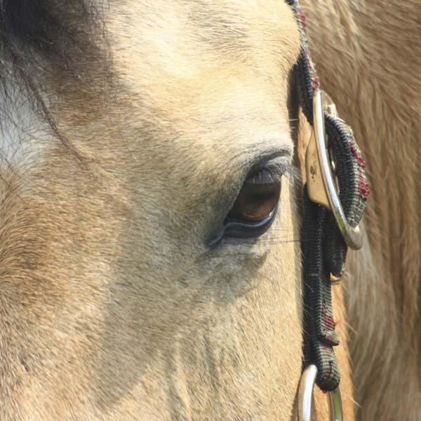 Vitamin e and equine motor neuron disease kpp for Equine motor neuron disease in horses