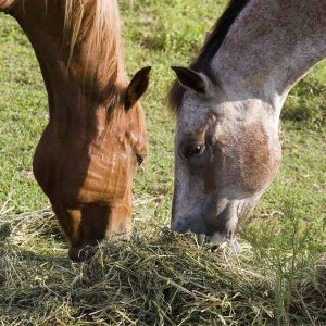 Fiber-the-key-to-healthier-horses