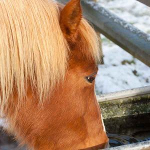 Preventing-Fall-and-Winter-Colic