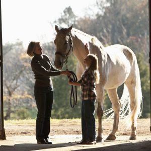 When-horses-reach-retirement-age