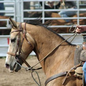 Electrolytes-who-needs-them-Your-horse-thats-who