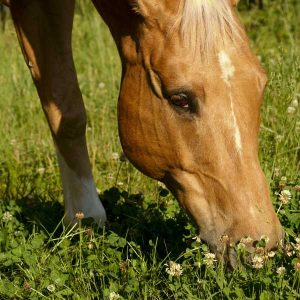 Protein-in-hay-and-pasture