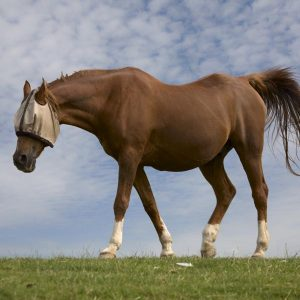 What-is-arthritis-and-why-are-older-horses-more-susceptible