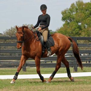 Dressage-is-not-all-bad