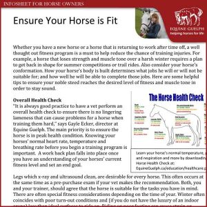 Ensure-Your-Horse-Is-Fit