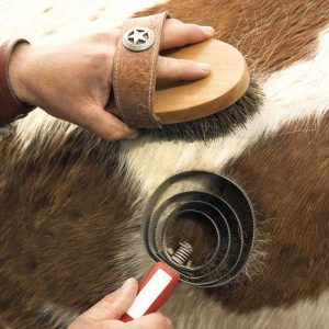 Keeping-horses-clean-in-the-cold-weather