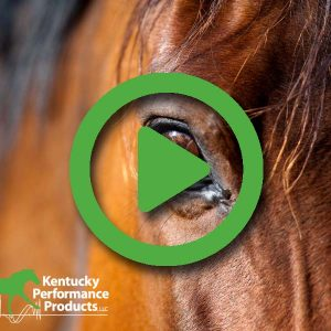 Add-Healthy-Calories-to-Your-Horses-Diet