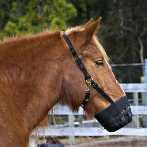 How-to-keep-those-muzzles-on