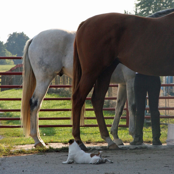 Research Confirms It: Tall Horses Are More Likely to Roar ...
