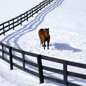 At-what-temperature-does-your-horse-start-to-get-cold