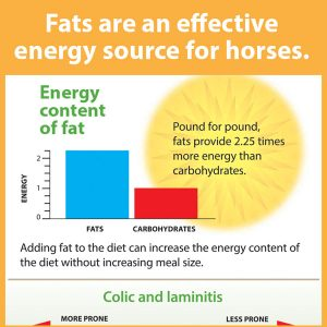 Fats-are-an-effective-energy-source-for-horses-14-222tb
