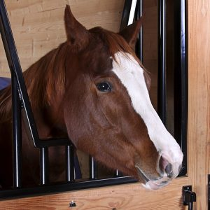 Nutrition-for-Lay-Up-Convalescing-Horses