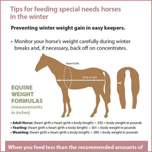 Tips-For-Feeding-Special-Needs-Horses-in-the-Winter-15-116tb