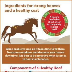 Ingredients-for-strong-hooves-and-a-healthy-coat-15-124tb