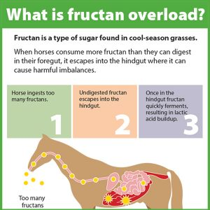 What-is-Fructan-Overload-in-Horses-15-140tb