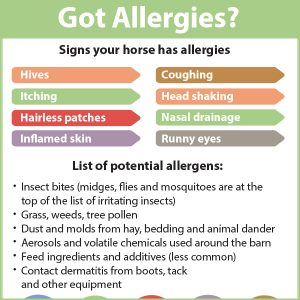Got-Horse-Allergies-15-169tb