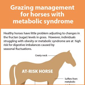 Grazing-Management-for-horses-with-metabolic-syndrome-15-142tb