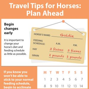 Travel-Tips-for-Horses-Part-1-Plan-Ahead-15-174tb