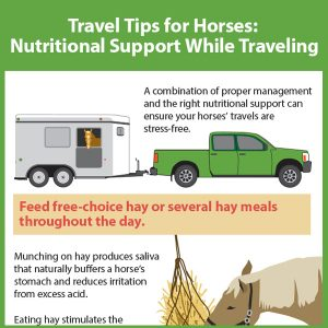 Travel-Tips-for-Horses-Part-2-Nutrional-Support-While-Traveling-15-174tb
