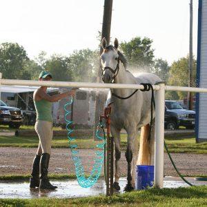 Horse-Electrolytes-Sweetened-or-Unsweetened