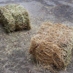 Hay-tip-for-easy-keepers