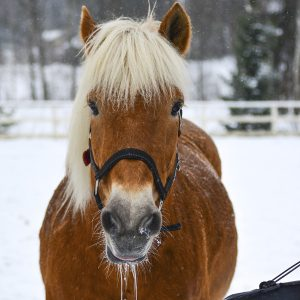 3-easy-tips-to-ensure-your-horse-is-getting-enough-water-this-winter