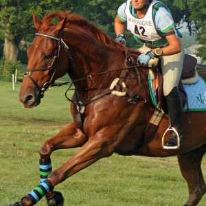 Nutritions-Role-in-Horse-Healing-and-Recovery