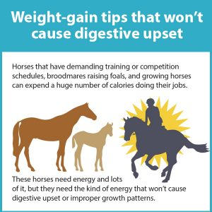 Weight-Gain-Tips-That-Wont-Cause-Digestive-Upset-16-118tb
