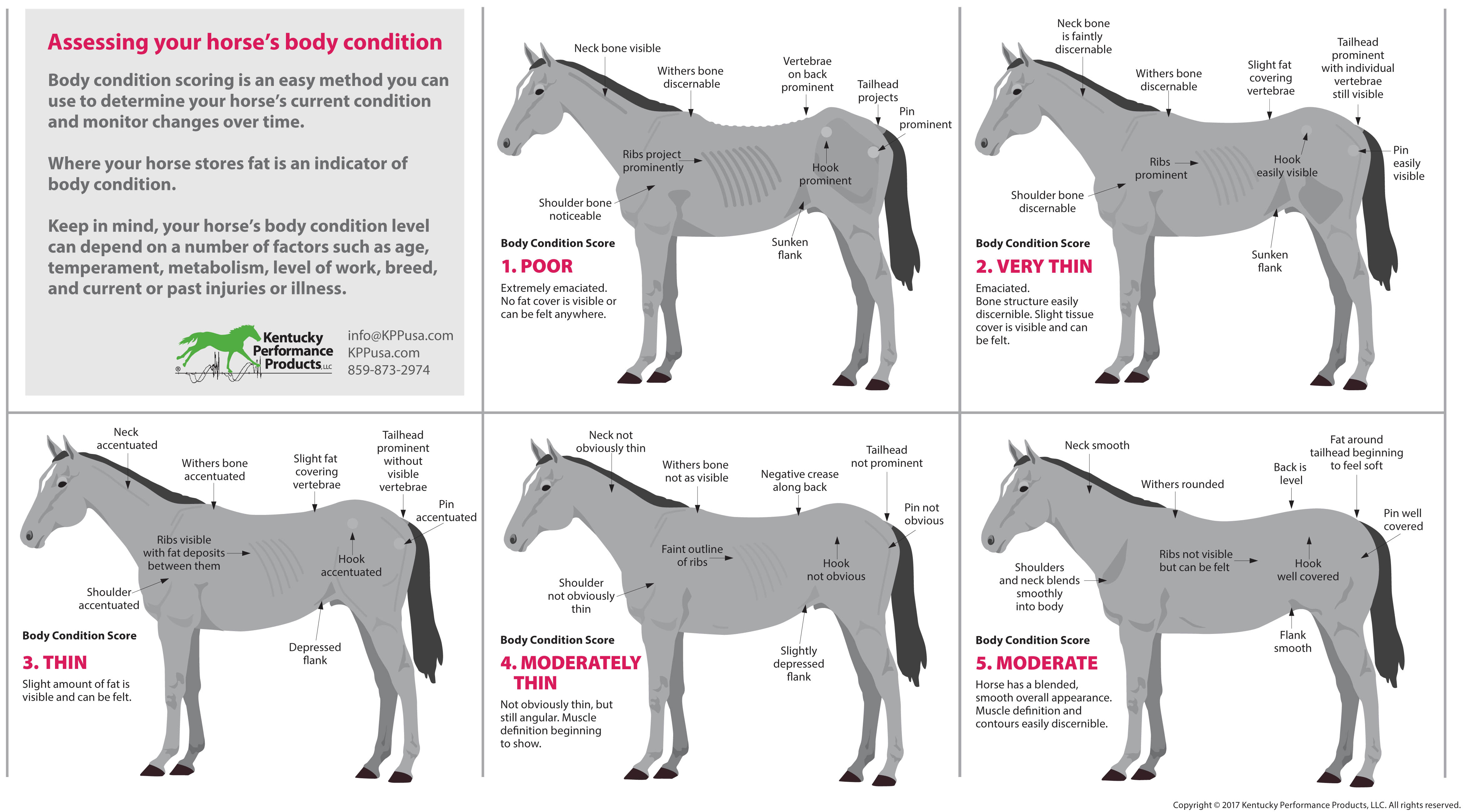 How-to-evaluate-your-horses-weight-chart
