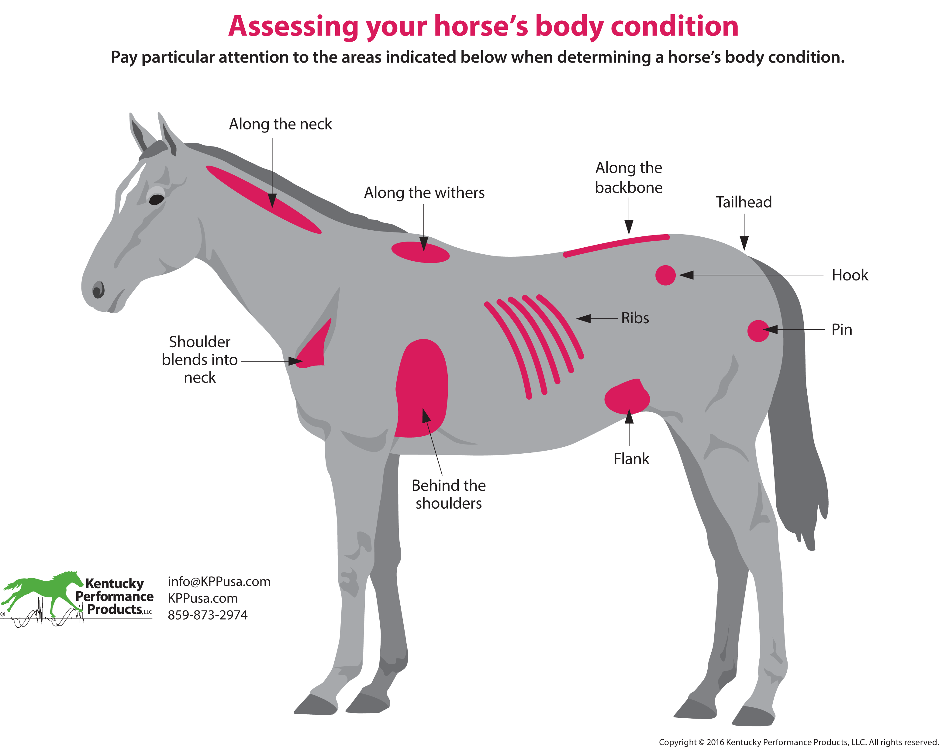 How-to-evaluate-your-horses-weight
