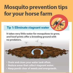 Mosquito-prevention-tips-for-your-horse-farm-16-186-tb