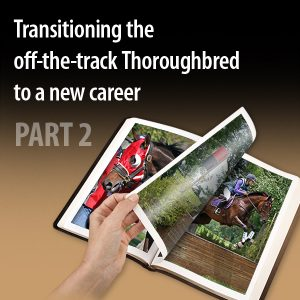 Transitioning-the-off-the-track-Thoroughbred-to-a-new-caree