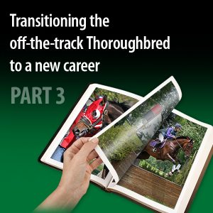 Transitioning-the-off-the-track-Thoroughbred-to-a-new-career