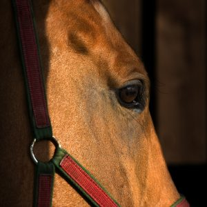 How-to-Protect-Your-Horse-from-West-Nile-Virus-Infection