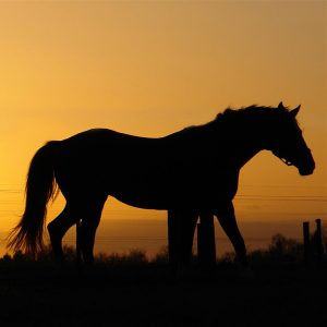 What-you-should-know-about-storing-horse-supplements-during-the-hot-summer-months