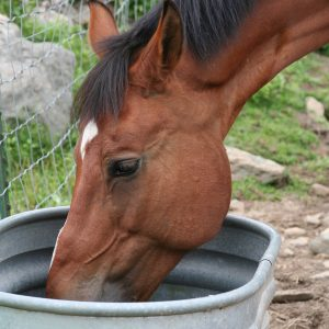 How-to-keep-your-horses-water-tank-clean