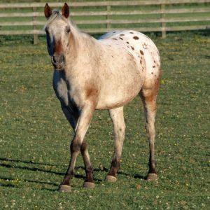 Vitamin-E-Necessary-for-Optimal-Health-in-Horses