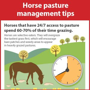 Horse-Pasture-Management-Tips-16-205-tb