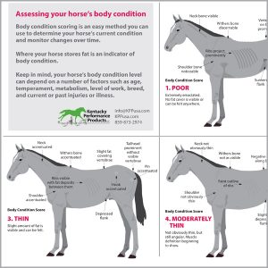 What-is-the-ideal-body-condition-score-for-your-horse-16-144