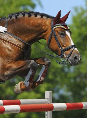 Anti-inflammatory-horse-supplements