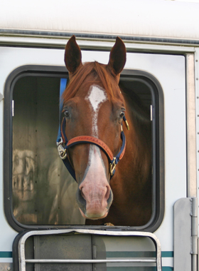 horse-travel-suppplements