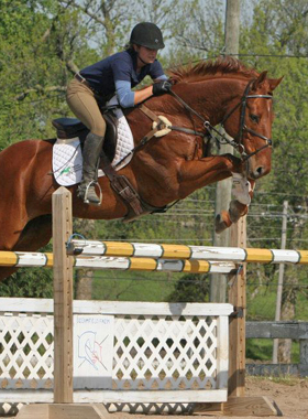 performance-horse-supplements