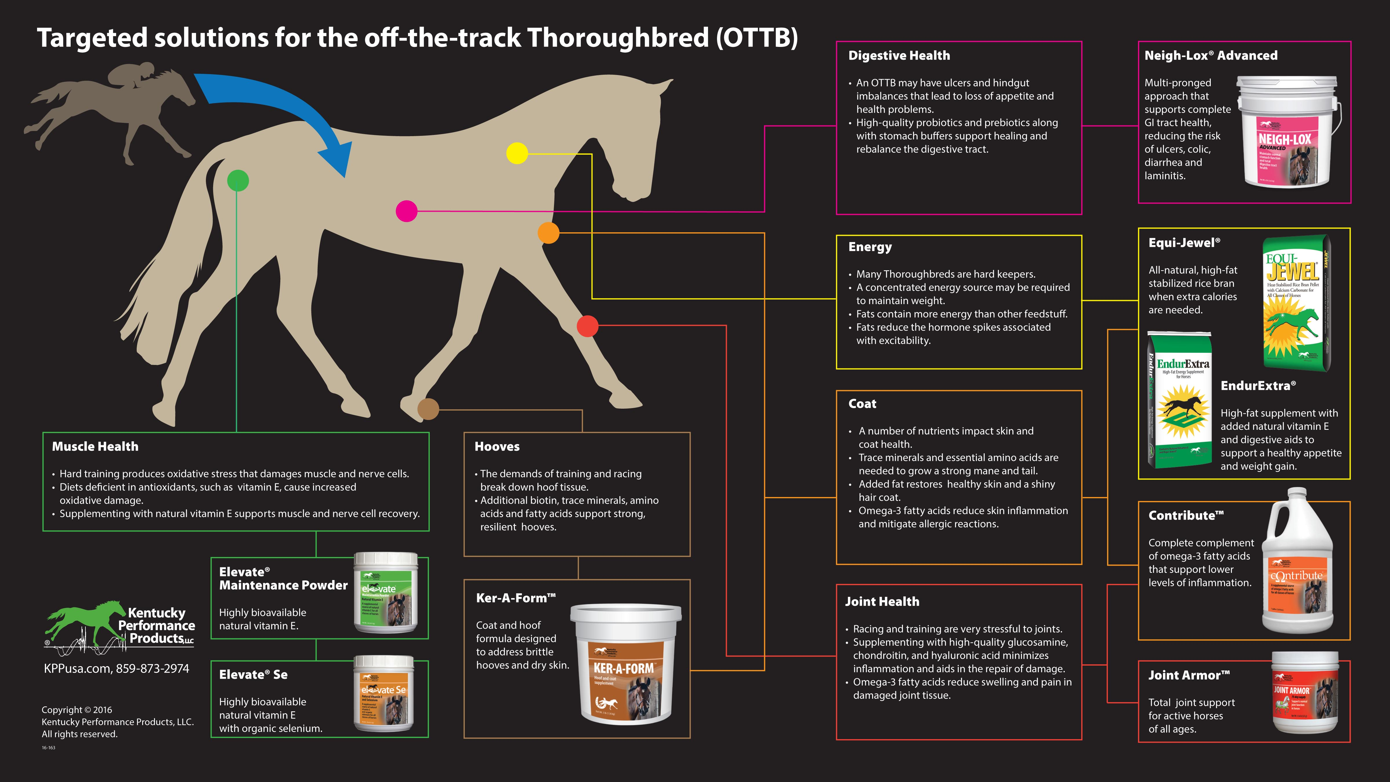 16-162-Targeted-solutions-for-off-the-track-thoroughbreds