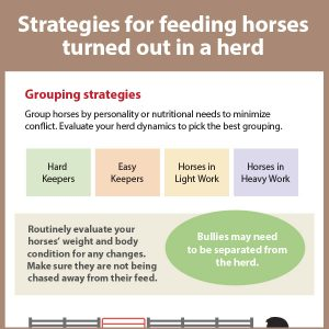 Strategies-for-feeding-horses-turned-out-in-a-herd-17-154tb