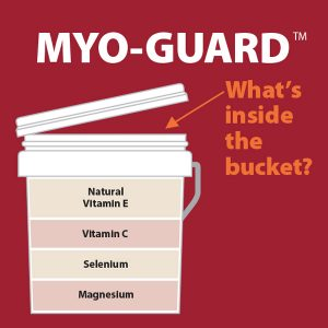 Myo-Guard-Whats-Inside-The-Bucket-17-224tb