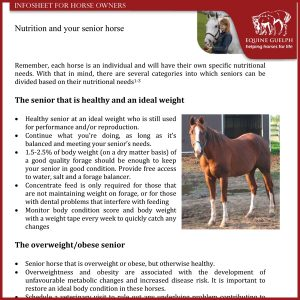 Nutrition-and-your-Senior-Horse