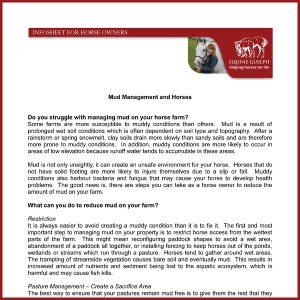 Mud-Management-In-Horses-1
